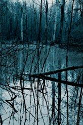 Dsc_3123-Freisinger_Everglades-blau-klein